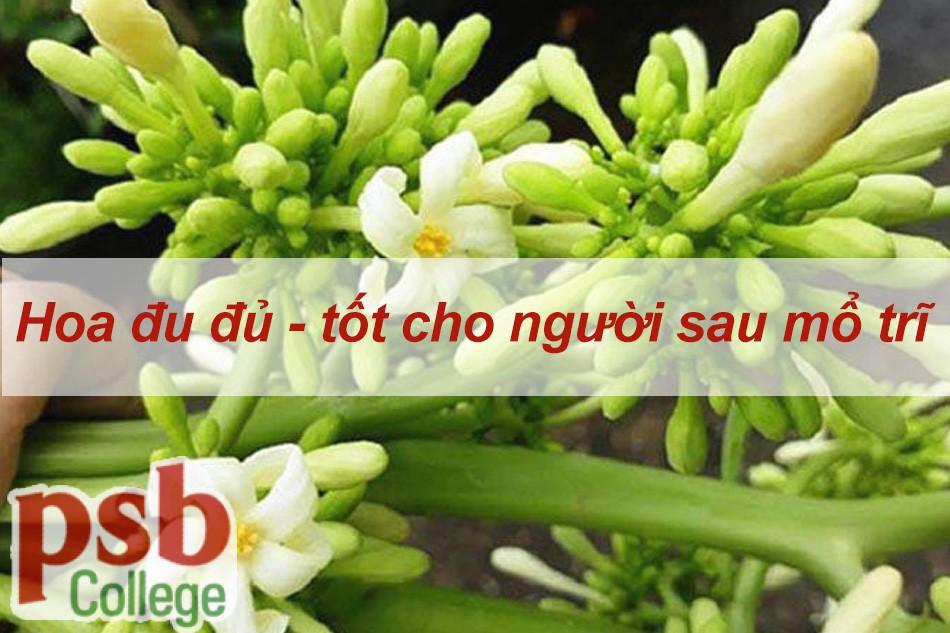 Hoa đu đủ tốt cho người sau mổ trĩ