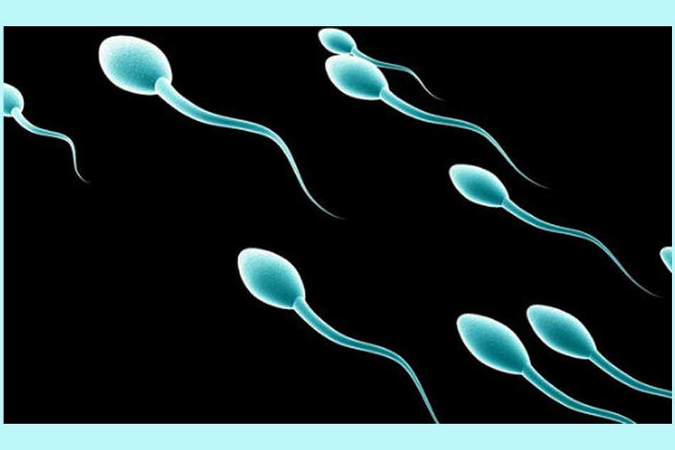 Nguyên nhân dẫn đến chất lượng tinh trùng giảm
